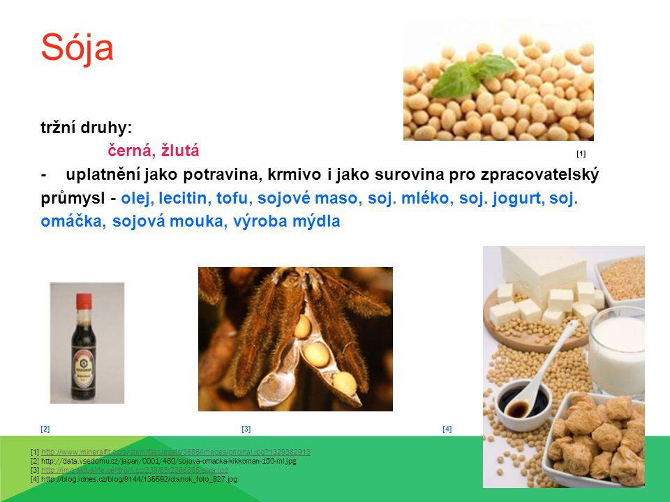 Sója tržní druhy: černá, žlutá [1]